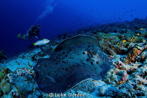 10mm, F11, 1/80......Stingray by Luke Gordon 